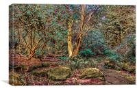 Woodland Glade in  Rosshall Park, Paisley, Canvas Print