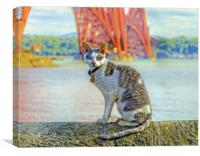 Snuggles The Cat, Canvas Print