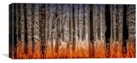 The Burnt Trees of Torridon, Canvas Print
