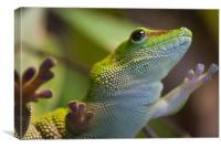 Green Lizard, Canvas Print