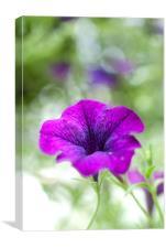 Purple Flower, Canvas Print