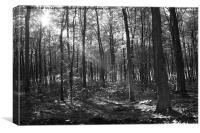 Sunny wood, Canvas Print