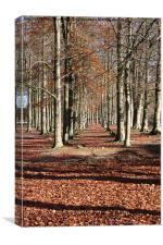 Autumn Wood, Canvas Print