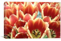 Tulip group, Canvas Print