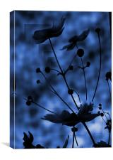 blue shadow, Canvas Print