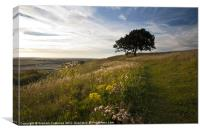 Bison Hill, Whipsnade, Canvas Print