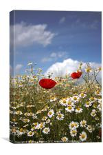Poppies and Daisies, Canvas Print