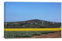Cornwall in Bloom, Canvas Print