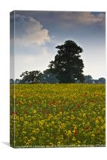 Summer Field, Canvas Print