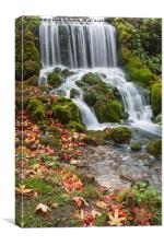 Littlebredy Waterfall , Canvas Print