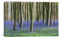 Bluebell Blur, Canvas Print