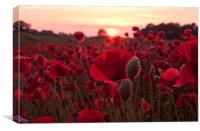 The Poppies of Remembrance , Canvas Print