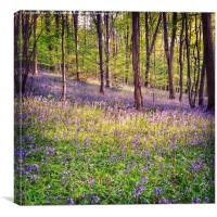 Bluebell Woods in Bristol, Canvas Print