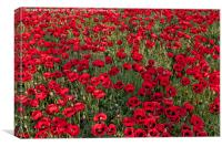 The Fields of Remembrance, Canvas Print