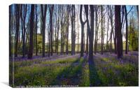 Bluebells at Dawn, Canvas Print
