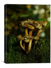 Fungi To Be With 2, Canvas Print