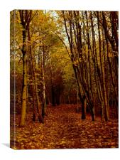 Autumnal Pathway, Canvas Print