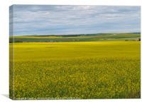 Canola in the Prairies, Canvas Print