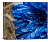 blue flower, Canvas Print