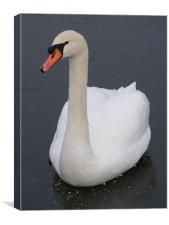 Frozen Swan, Canvas Print