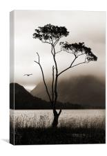 Tree at Buttermere, Canvas Print
