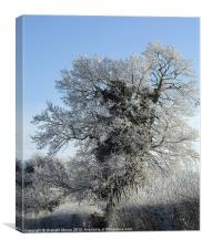 Frost rimed tree, Canvas Print