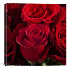Group of red roses, Canvas Print