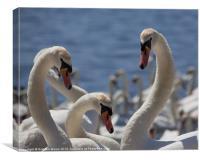 Three swans, Canvas Print