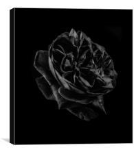 Black Rose, Canvas Print