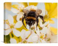 Bumblebee, Canvas Print