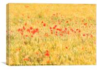 Poppy field abstract, Canvas Print