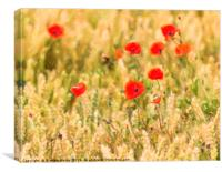 Group of Poppies abstract, Canvas Print