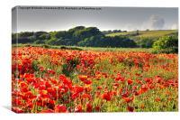 Poppy Field, Canvas Print