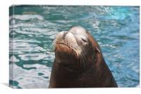 Sea Lion posing, Canvas Print