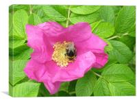 high bumble bee, Canvas Print