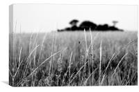 Serengeti Grass, Canvas Print