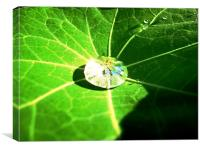 Raindrop in a Geranium leaf, Canvas Print