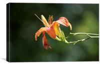 Summer Flower , Canvas Print
