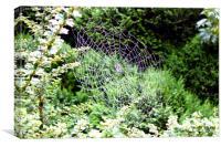 Spider web, Canvas Print