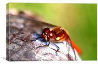 Dragonfly, Canvas Print