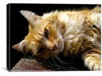 Cottage Cat, Canvas Print