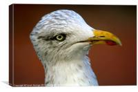 Inquisitive Herring Gull, Canvas Print