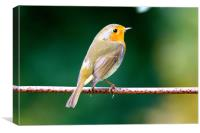 Robin on a Wire, Canvas Print