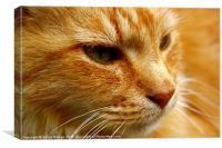 Cat in Close-up, Canvas Print