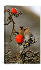 Waxwings in Portrait, Canvas Print