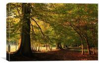 Start of Autumn, Canvas Print