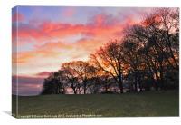 sun set behind the trees, Canvas Print