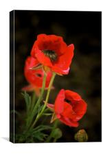 Red Wildflowers with corrected colors and lighting, Canvas Print