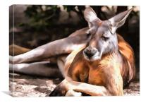 Kangaroo portrait, Canvas Print