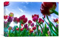 Red and yellow tulips against blue sky, Canvas Print
